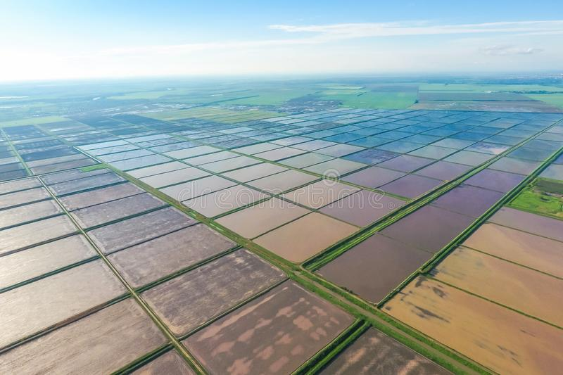 Flooded rice paddies. Agronomic methods of growing rice in the f. Ields. Flooding the fields with water in which rice sown. View from above royalty free stock photos