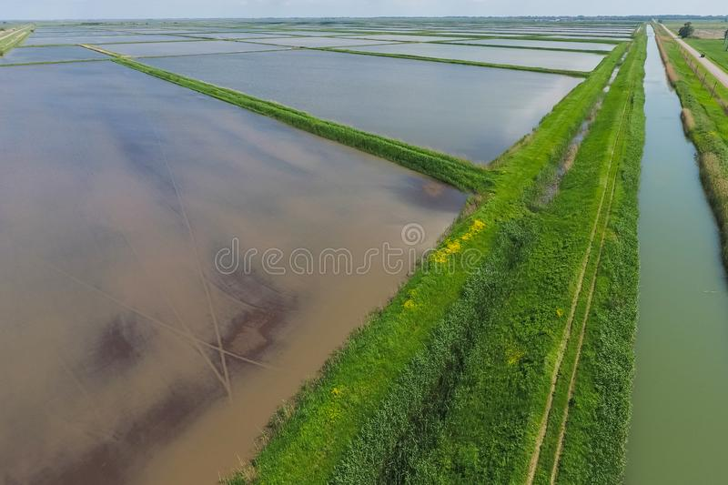 Flooded rice paddies. Agronomic methods of growing rice. In the fields. Flooding the fields with water in which rice sown. View from above royalty free stock images