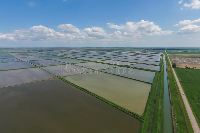 Flooded rice paddies. Agronomic methods of growing rice. In the fields. Flooding the fields with water in which rice sown. View from above royalty free stock image
