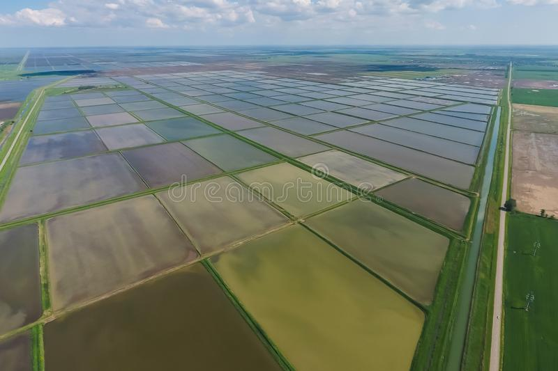 Flooded rice paddies. Agronomic methods of growing rice. In the fields. Flooding the fields with water in which rice sown. View from above royalty free stock photos