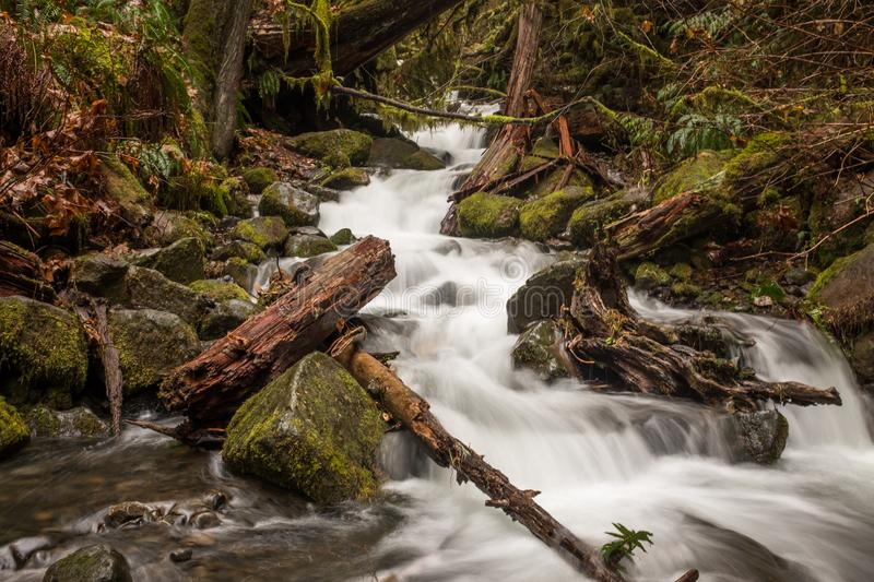 A flooded stream fast flowing over rocks and trees on a trial in the Columbia River Gorge, Oregon, USA on a long royalty free stock images