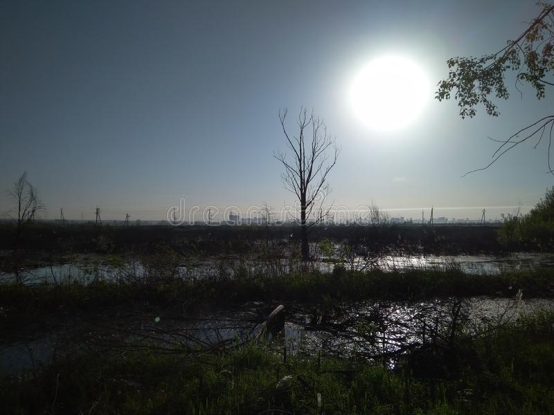 The flooded surface of a swamp with a dried dead tree on the background of a distant city terrible gloomy landscape stock image