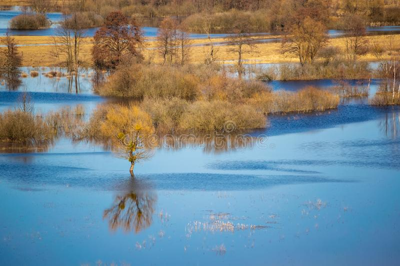Flooded trees during high water at spring time, Snov river, Ukraine. Scenic view of flooded trees during high water at spring time, Snov river, Ukraine stock photos