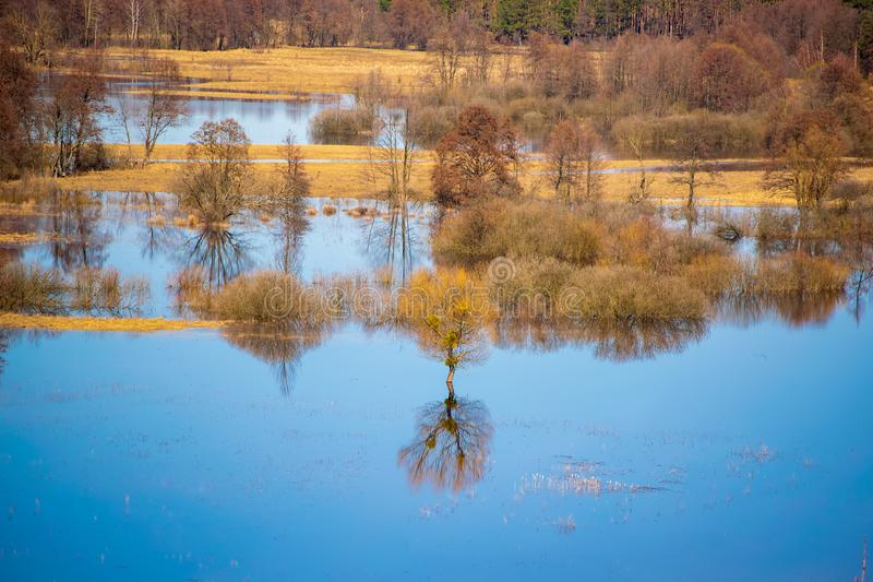 Flooded trees during high water at spring time, Snov river, Ukraine. Scenic view of flooded trees during high water at spring time, Snov river, Ukraine royalty free stock photo
