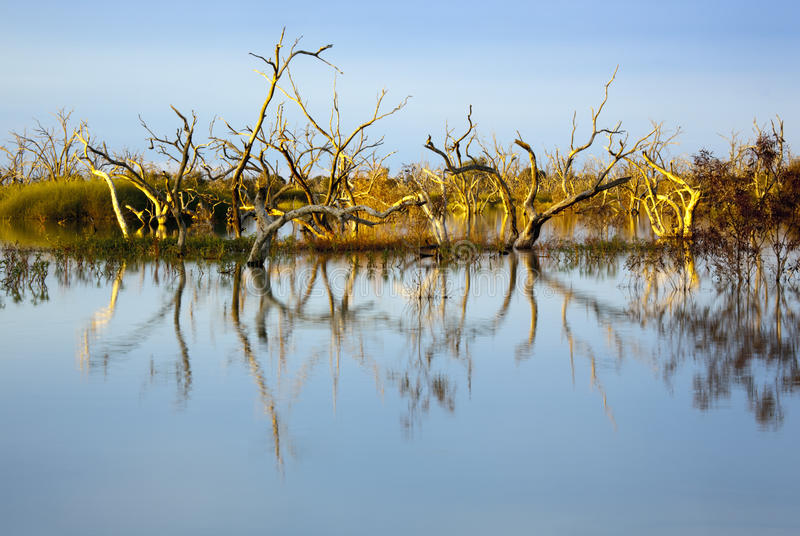 Download Flooded Trees at Sunset stock photo. Image of colour - 14861186