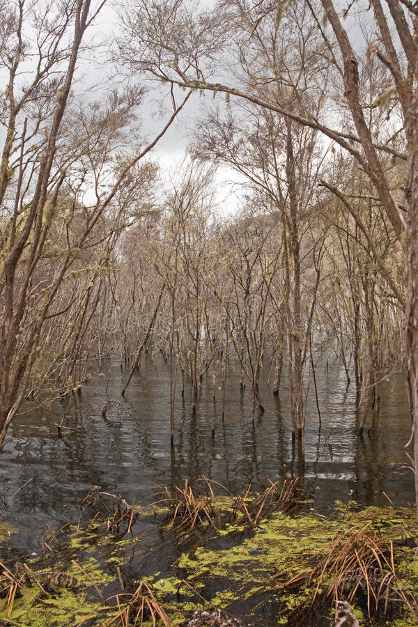 Flooded tropical forest stretching to the horizon stock images
