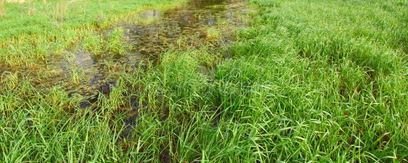 Flooded Wetland Background royalty free stock photography