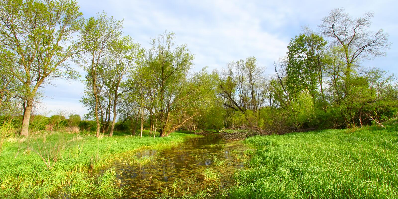 Flooded Wetland - Illinois royalty free stock photos