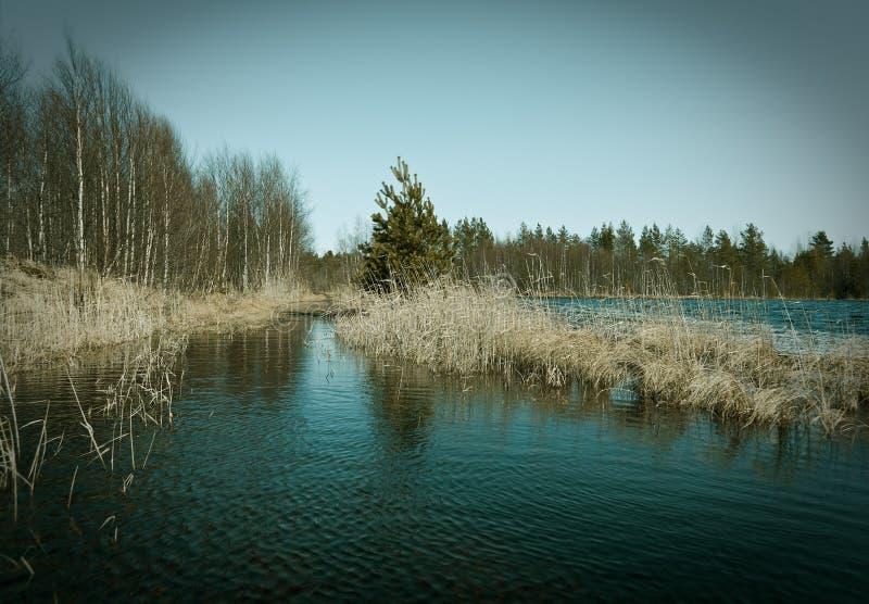 Flooding весны на озере стоковые фото