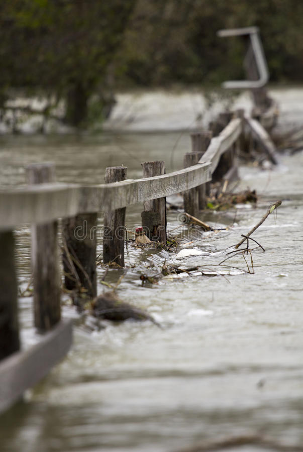 Flooding river. Over the wooden fence royalty free stock images