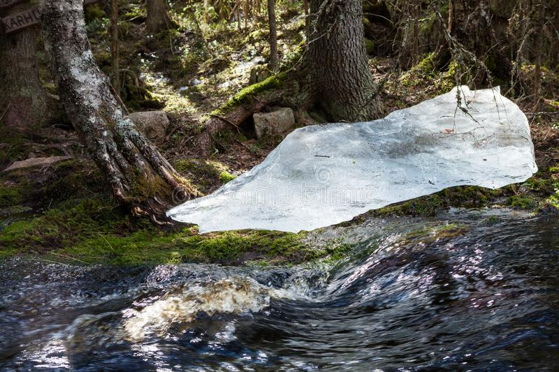 Flooding river and piece of ice in forest. At spring stock photos