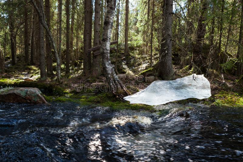 Flooding river and piece of ice in forest. At spring royalty free stock photos