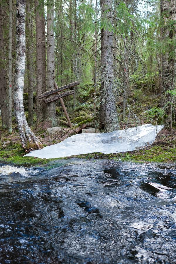 Flooding river and piece of ice in forest. At spring stock photo