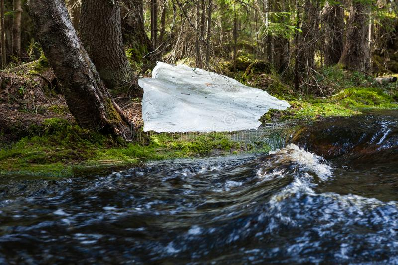Flooding river and piece of ice in forest. At spring royalty free stock images