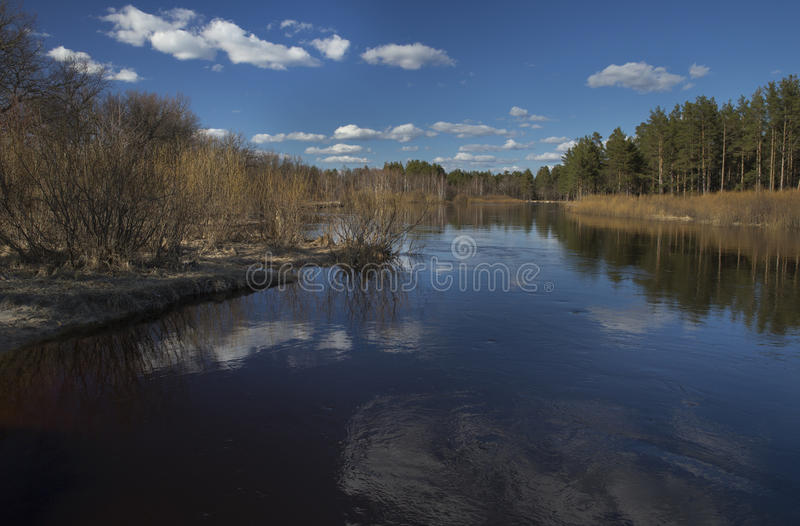 Flooding of the River in the Spring. Spring River Flooding, wide view on river and forest royalty free stock image