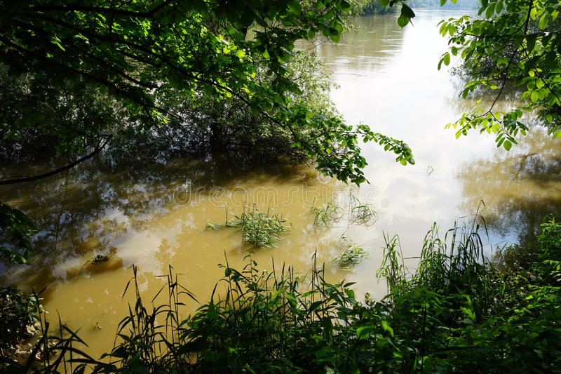 Flooding. On the river and trees stock images
