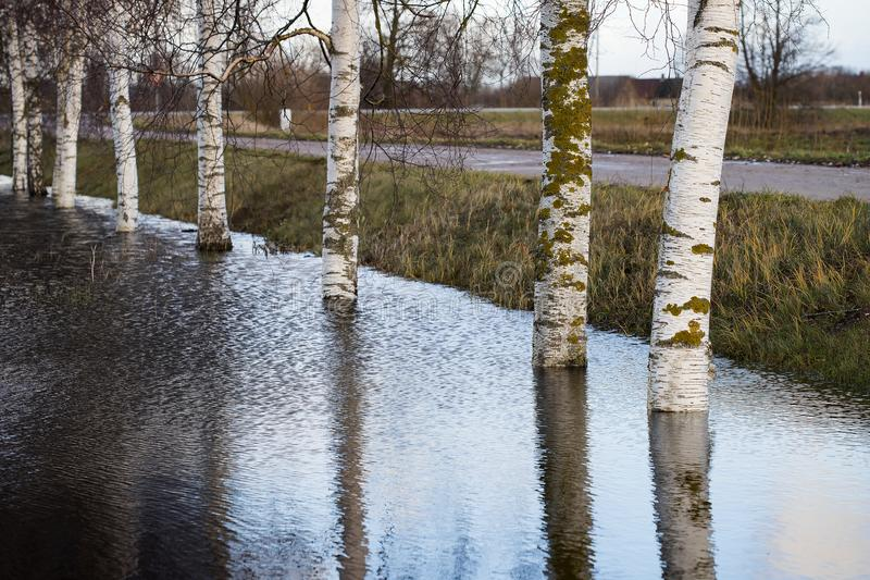 Flooding on the river - waterlogged trees royalty free stock photography