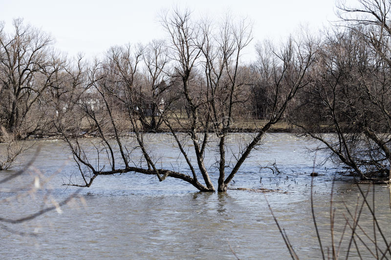 Flooding Scene with River and a tree in the middle. Of water royalty free stock photo