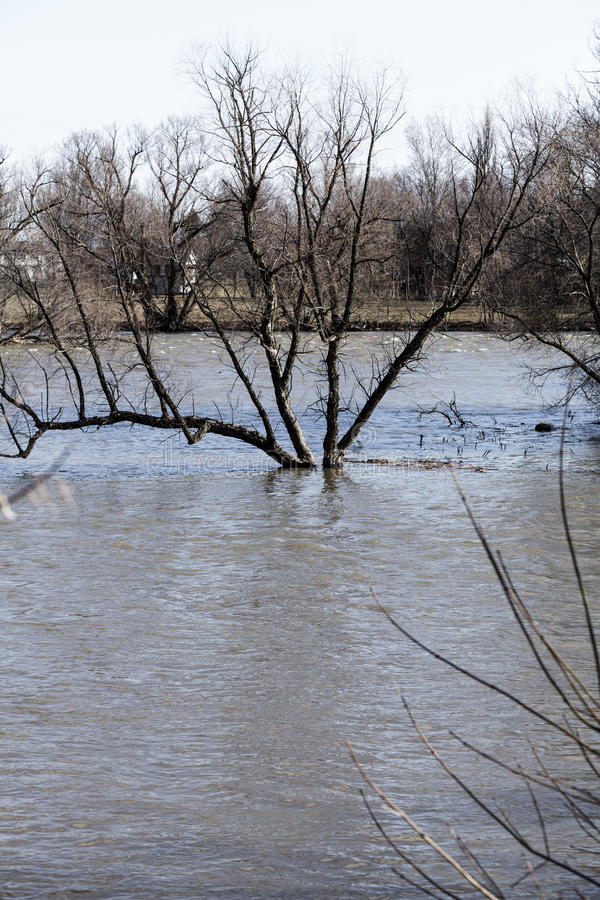 Flooding Scene with River and a tree in the middle. Of water stock photography