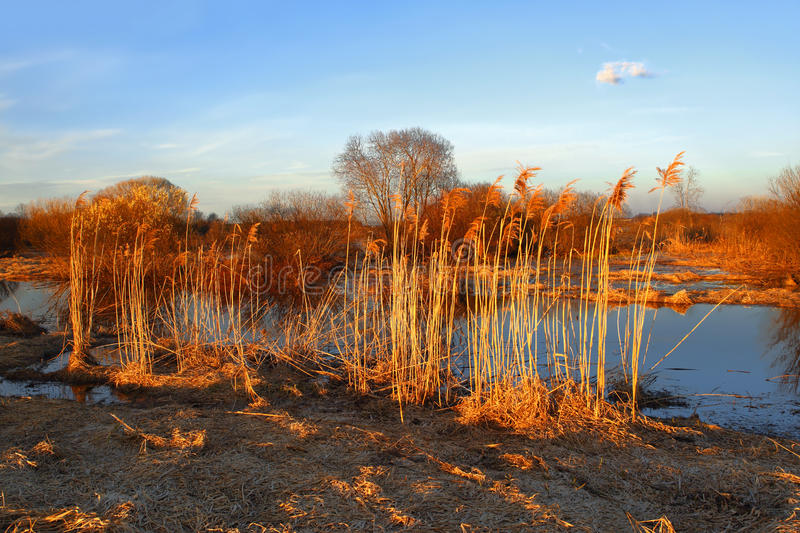 Download Flooding In Wildlife Preserve Stock Images - Image: 25310364