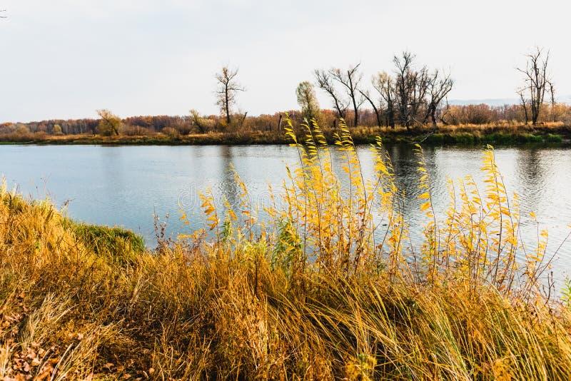 Floodplain łąki step strefa obraz stock