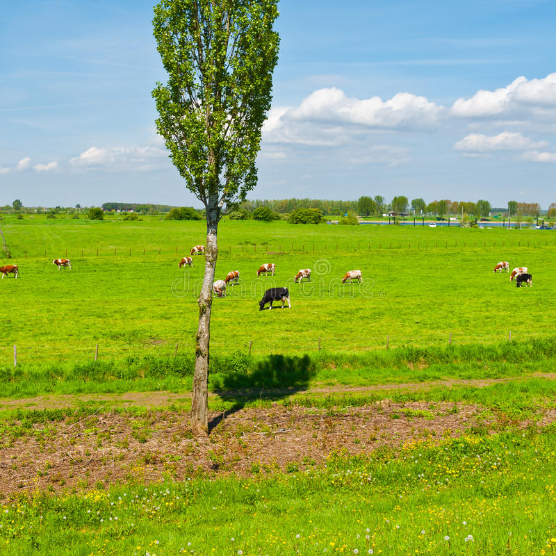 floodplain stockbild