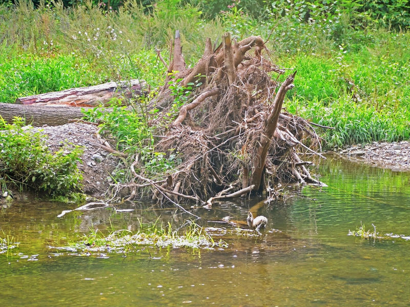 Floodplain las zdjęcia stock