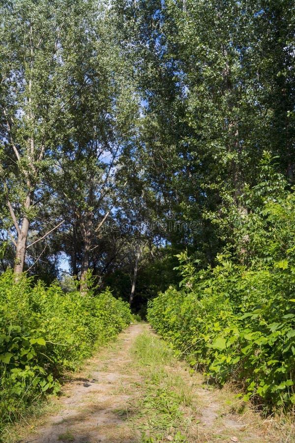 Floodplain lasowa ścieżka obrazy stock