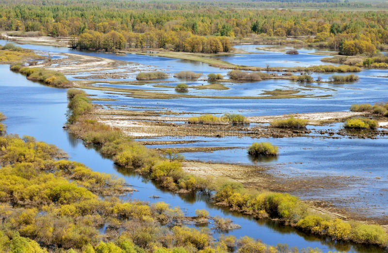 Floods in late spring. Meadows. Forests in the water. Floodplain river. Reserve stock photography
