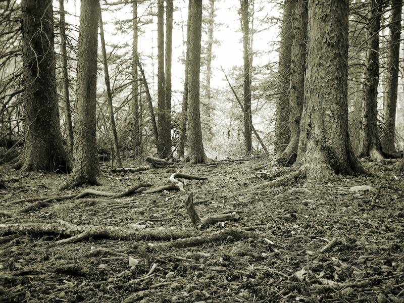 floor forest στοκ εικόνες με δικαίωμα ελεύθερης χρήσης