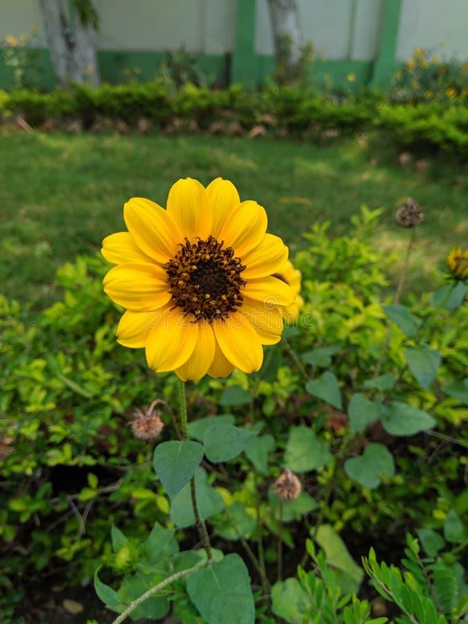 A flor é tão bonita fotos de stock royalty free