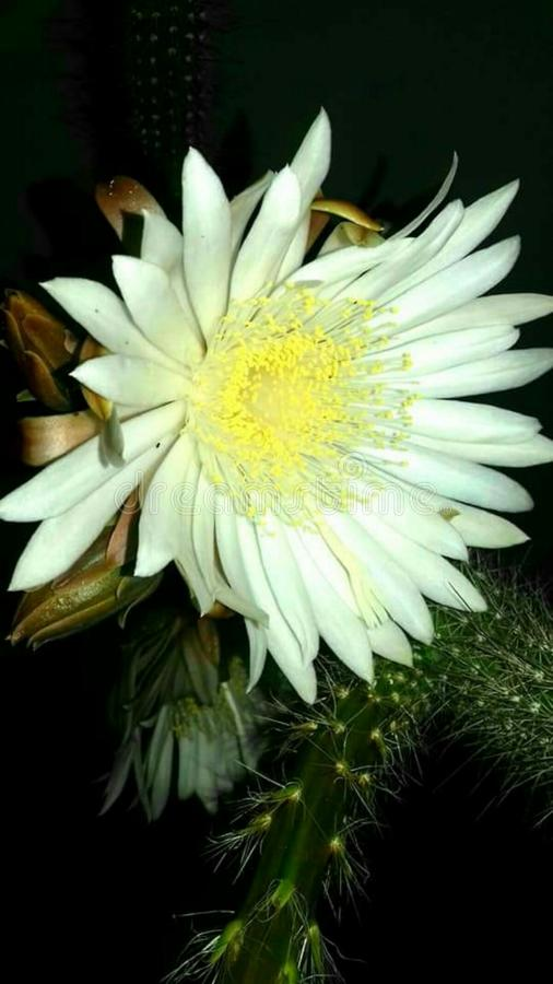 Flor única en naturaleza fotografía de archivo