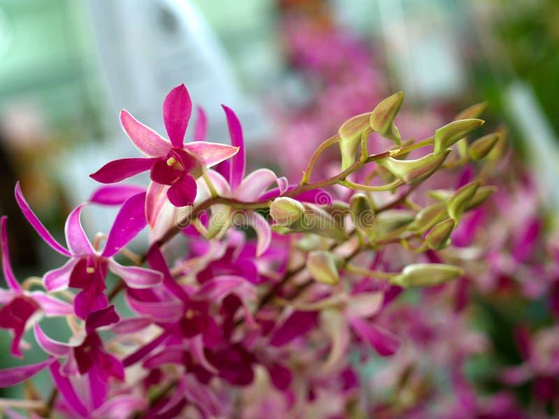 Flor 01 de la orquídea fotografía de archivo libre de regalías
