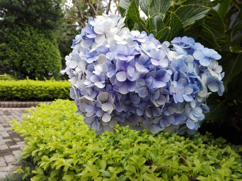 flor 免版税库存照片