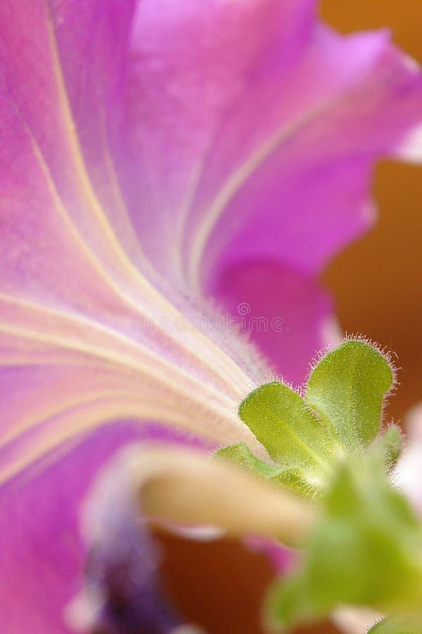 Download Flor imagen de archivo. Imagen de suave, hoja, bajo - 100526653