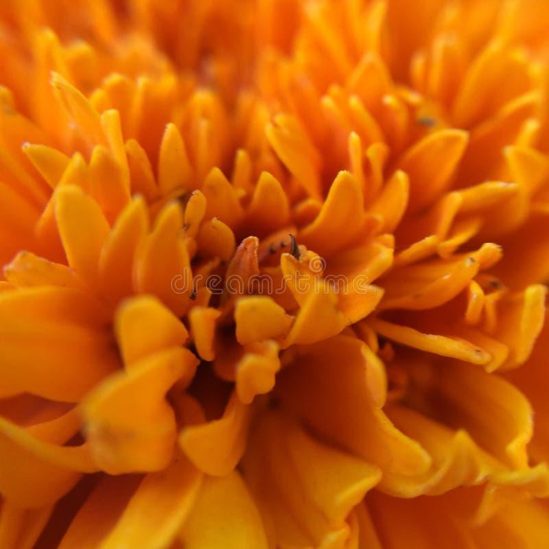 flor fotografie stock