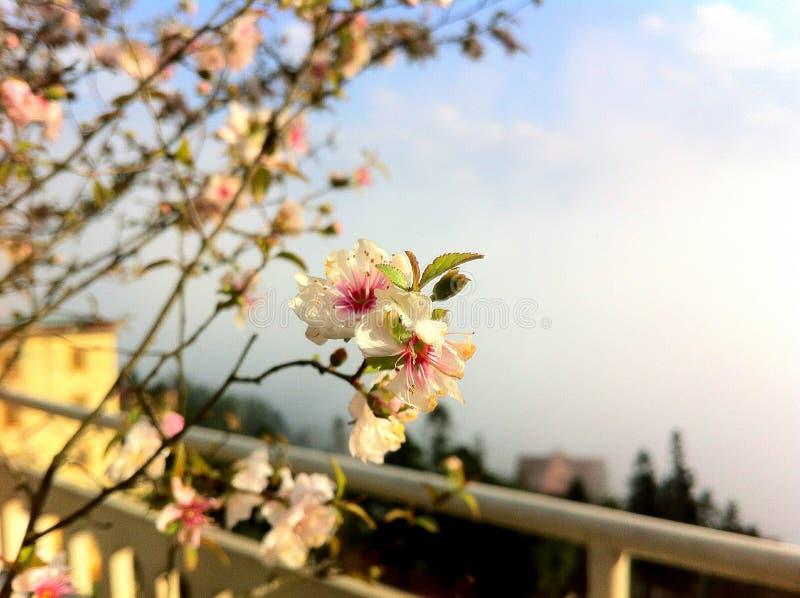 Flor fotos de stock royalty free