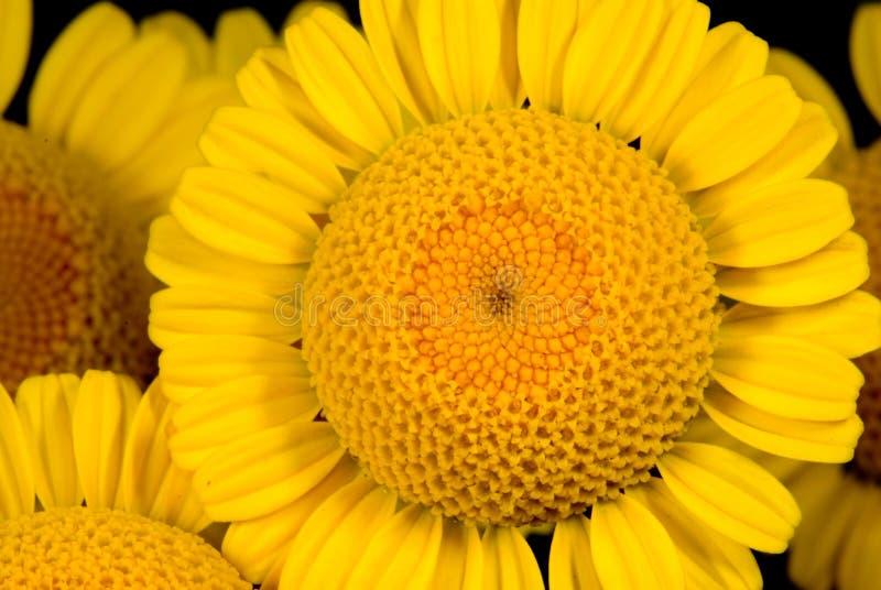 Flor 15 foto de stock