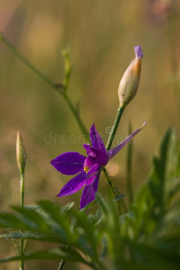 A flor foto de stock royalty free