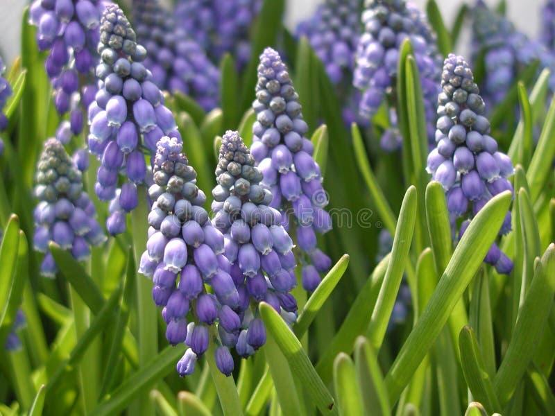 Download Flor imagen de archivo. Imagen de hoja, neatness, licencia - 181301