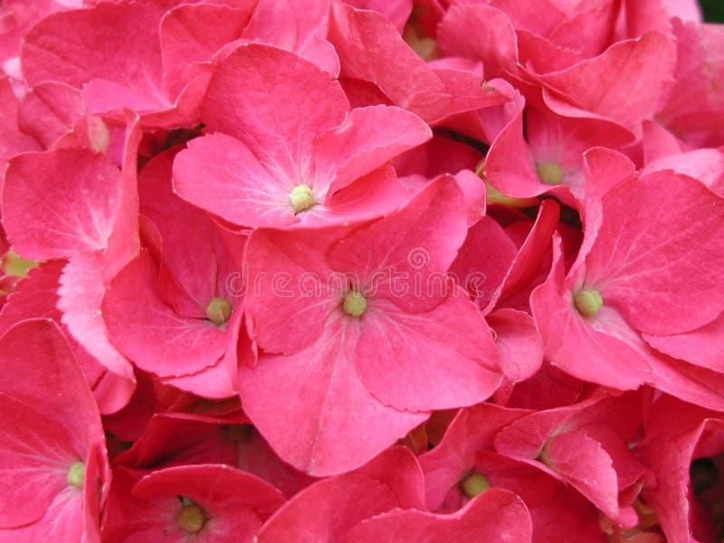 Download Flor imagen de archivo. Imagen de cierre, pink, flores - 181331