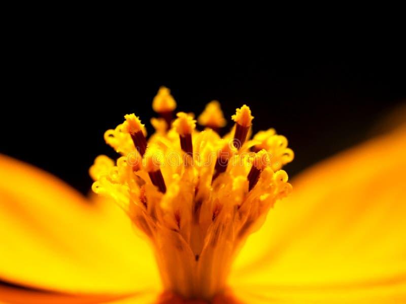 Flor 19 imagem de stock