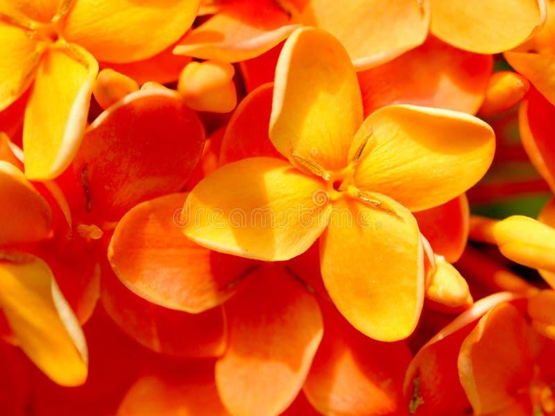 Flor 2 imagem de stock