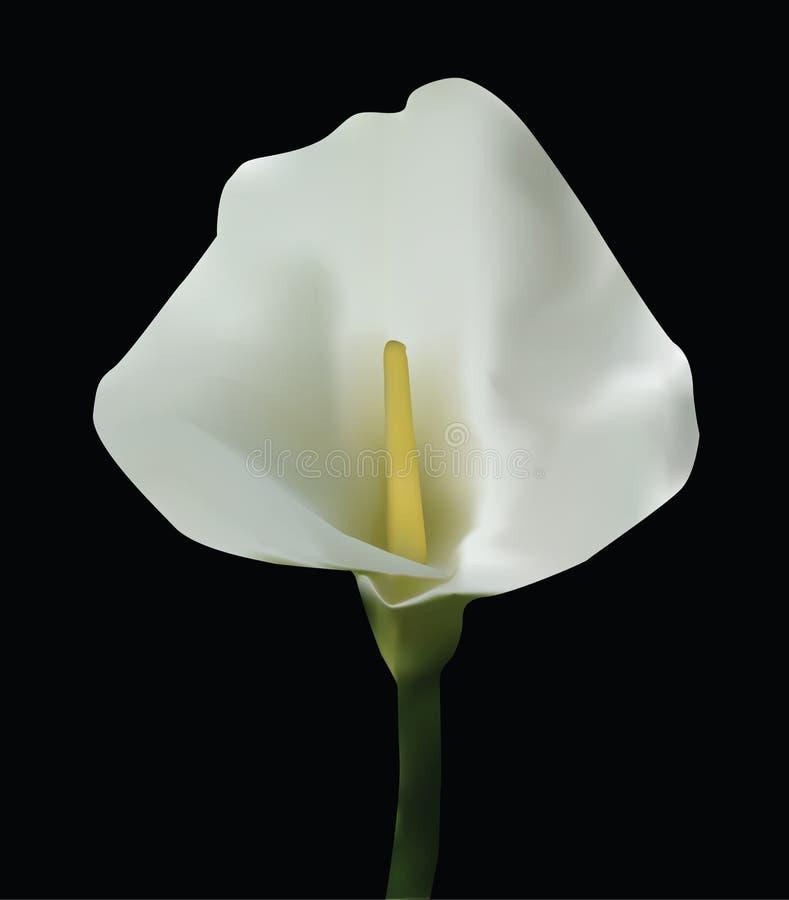 Flor ilustração stock