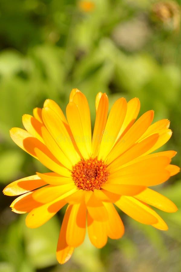 Download Flor foto de archivo. Imagen de flor, resorte, jardín - 42436962
