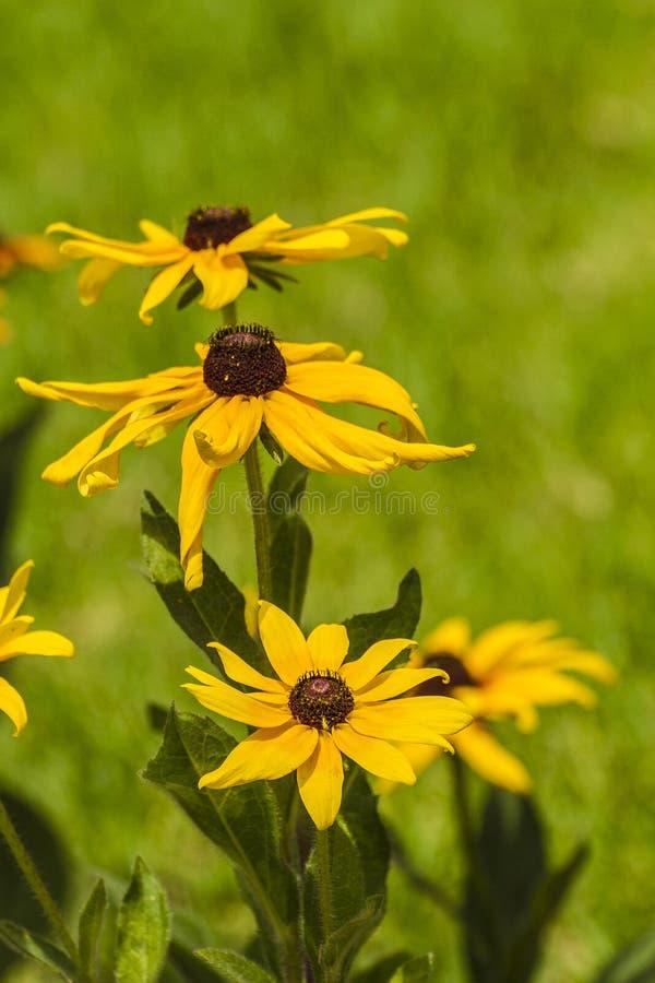 Download Flor imagen de archivo. Imagen de flora, prado, floral - 42437243