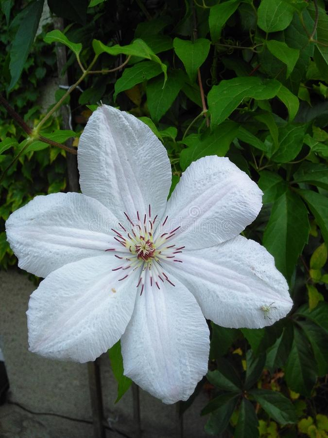 Flor 1 fotografía de archivo
