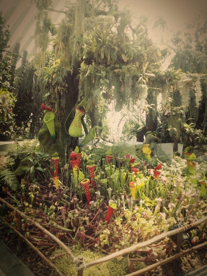 Flor imagen de archivo libre de regalías