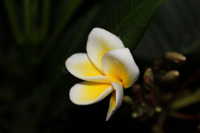 Flor fotos de stock