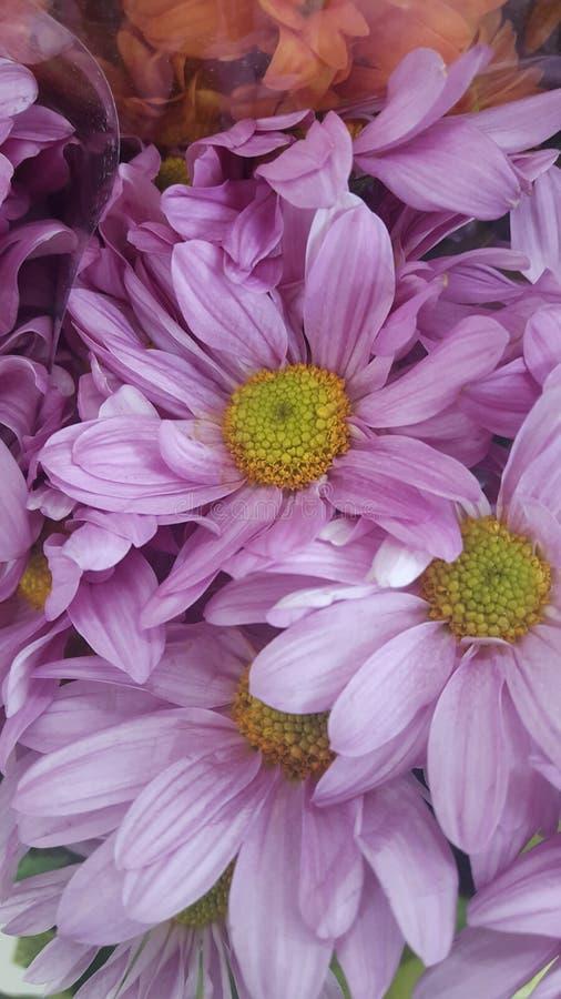 A flor imagem de stock